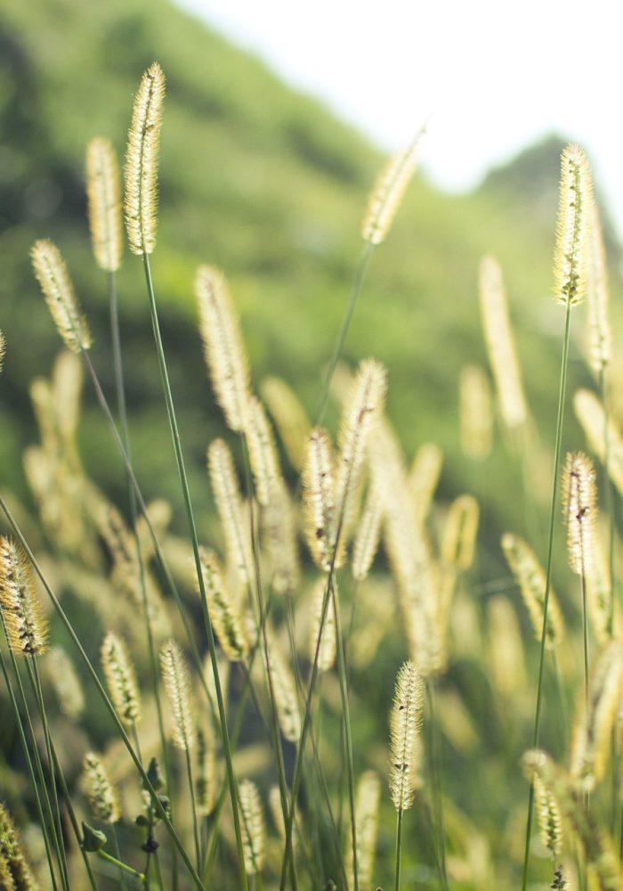 grass-1209588_1920