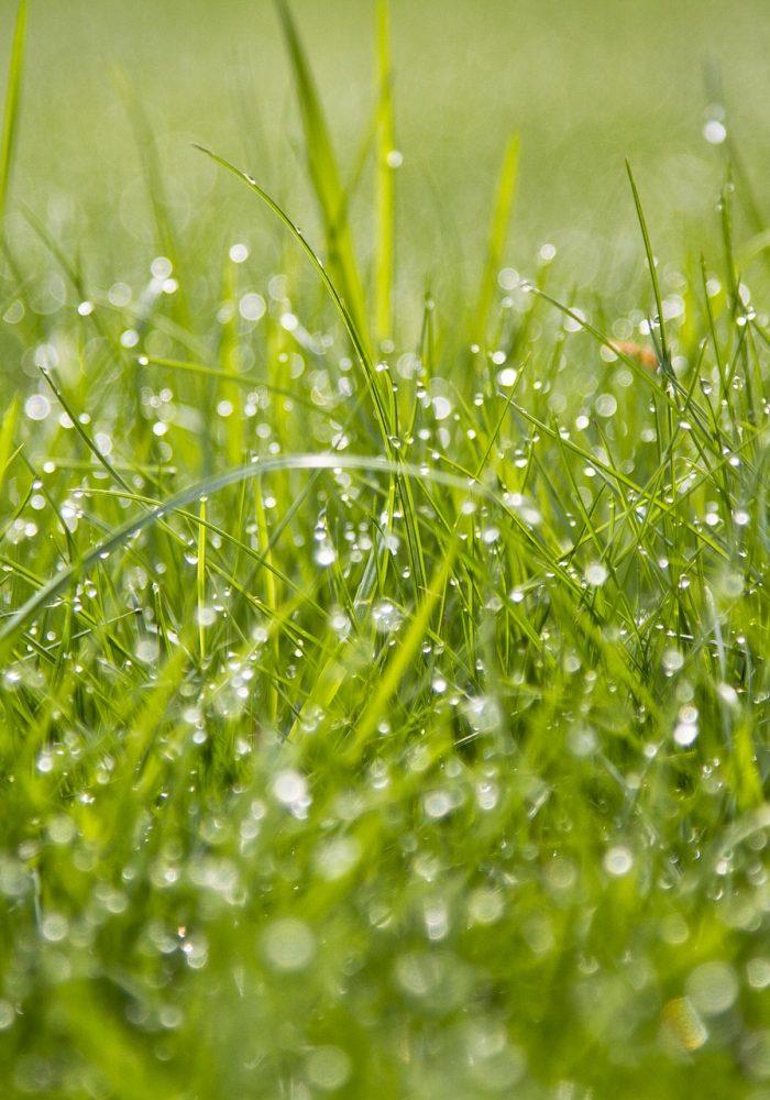 grass-2183288_1920